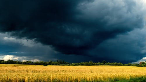 Dark Storm Clouds Gathering Over a Yellow Grass field