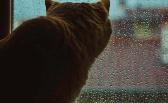 cat looking at storm