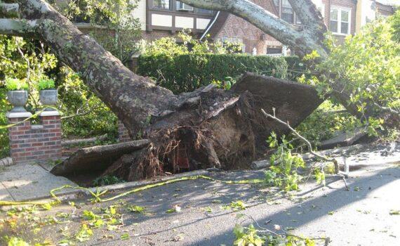 tree damaged by tornado